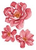 Flores del ejemplo de la acuarela stock de ilustración