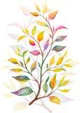 Flores del ejemplo de la acuarela en fondo simple Fotos de archivo libres de regalías