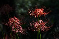 Flores del equinoccio foto de archivo