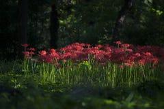 Flores del equinoccio foto de archivo libre de regalías