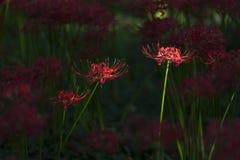 Flores del equinoccio imagen de archivo