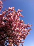 Flores del flor Fotografía de archivo libre de regalías