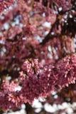 Flores del flor Foto de archivo libre de regalías