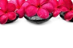Flores del Frangipani con el ZEN Stone Imagen de archivo