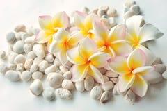Flores del Frangipani con la piedra en el fondo blanco Fotografía de archivo