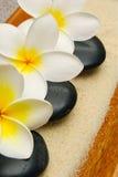 Flores del Frangipani y piedras del masaje Imagen de archivo