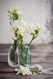 Flores del Freesia Imágenes de archivo libres de regalías