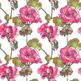 Flores del geranio, brotes, hojas libre illustration