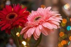 Flores del Gerbera con efecto de la falta de definición Foto de archivo libre de regalías