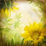 Flores del girasol y hojas del verde Foto de archivo libre de regalías
