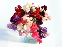 Flores del guisante de olor aisladas en el fondo blanco imagen de archivo libre de regalías