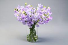 Flores del guisante de olor en un florero de cristal imagen de archivo libre de regalías