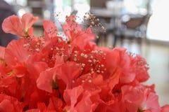 Flores del guisante de olor Verano Foto de archivo