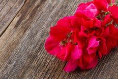 Flores del guisante dulce foto de archivo