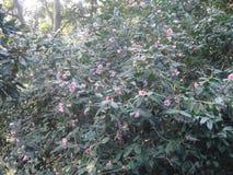 flores del hibisco en los arbustos imagenes de archivo
