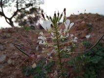 Flores del invierno fotografía de archivo