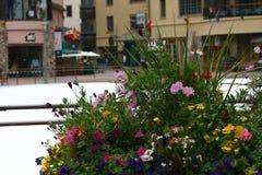 Flores del invierno Imagen de archivo libre de regalías