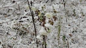 Flores del invierno Imágenes de archivo libres de regalías