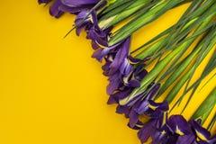 Flores del iris en un fondo amarillo fotografía de archivo