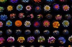 Flores del jabón Fotografía de archivo libre de regalías
