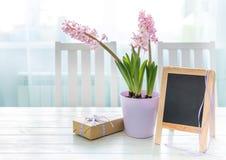 Flores del jacinto con el giftbox y la pequeña pizarra imágenes de archivo libres de regalías