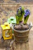 Flores del jacinto en pote de madera Fotos de archivo