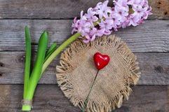 Flores del jacinto en un fondo de madera Imagen de archivo libre de regalías