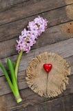 Flores del jacinto en un fondo de madera Fotos de archivo libres de regalías
