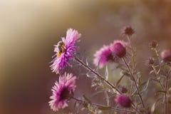 ¡Flores del jardín! Foto de archivo