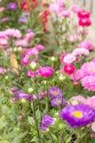 Flores del jardín Fotos de archivo libres de regalías