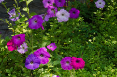 Flores del jardín Imágenes de archivo libres de regalías