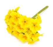 Flores del jardín de diversas variedades aisladas en el backgrou blanco Imágenes de archivo libres de regalías