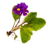 Flores del jardín de diversas variedades aisladas en el backgrou blanco Fotografía de archivo libre de regalías