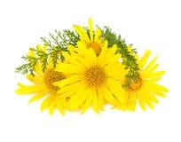 Flores del jardín de diversas variedades aisladas en el backgrou blanco Imagen de archivo libre de regalías