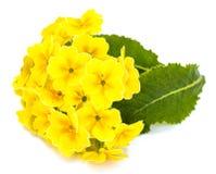 Flores del jardín de diversas variedades aisladas en el backgrou blanco Fotos de archivo libres de regalías