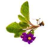 Flores del jardín de diversas variedades en el backgrou blanco Imagen de archivo libre de regalías