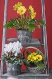 Flores del jardín del resorte en crisoles Imágenes de archivo libres de regalías