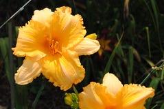 Flores del jardín del tiempo de primavera Fotos de archivo libres de regalías