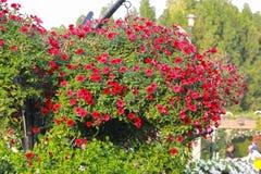 Flores del jardín del milagro de Dubai Fotografía de archivo libre de regalías