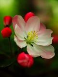 Flores del jardín - puntos culminantes - anillo por rojos Imagenes de archivo