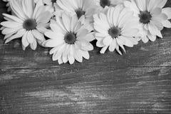 Flores del jardín sobre fondo de madera pintado de la tabla contexto con el espacio de la copia Flores hermosas en fondo de mader Foto de archivo
