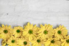 Flores del jardín sobre fondo de madera pintado de la tabla contexto con el espacio de la copia Flores hermosas en fondo de mader Imágenes de archivo libres de regalías