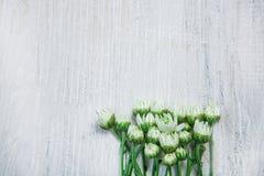 Flores del jardín sobre fondo de madera pintado de la tabla contexto con el espacio de la copia Flores hermosas en fondo de mader Fotos de archivo libres de regalías
