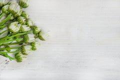 Flores del jardín sobre fondo de madera pintado de la tabla contexto con el espacio de la copia Flores hermosas en fondo de mader Imagen de archivo