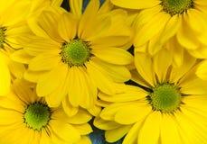 Flores del jardín sobre fondo de madera pintado de la tabla contexto con el espacio de la copia Flores hermosas en fondo de mader Fotos de archivo