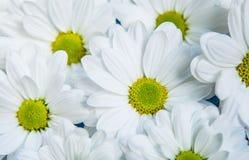 Flores del jardín sobre fondo de madera pintado de la tabla contexto con el espacio de la copia Flores hermosas en fondo de mader Foto de archivo libre de regalías