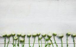 Flores del jardín sobre fondo de madera pintado de la tabla contexto con el espacio de la copia Flores hermosas en fondo de mader Imagen de archivo libre de regalías