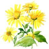 Flores del jardín del verano Ilustración de la acuarela Fotos de archivo