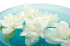 Flores del jazmín que flotan en el agua Fotografía de archivo
