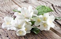 Flores del jazmín sobre la tabla de madera vieja Imágenes de archivo libres de regalías